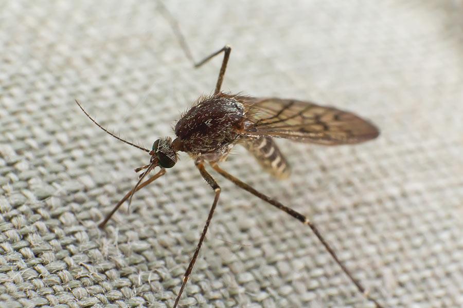 mosquito-trying-to-bite-through-cloth-V3QDX5U